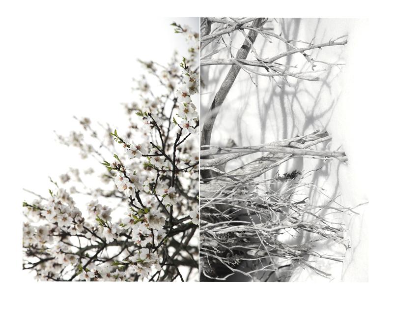 contrastes de mars