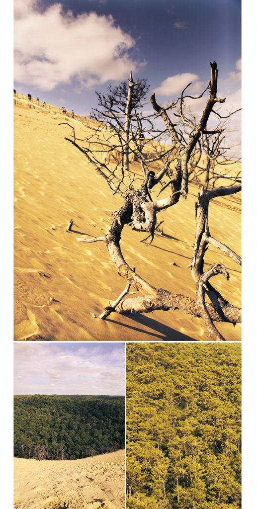 bassin d'arcachon dune du pilat ou pyla