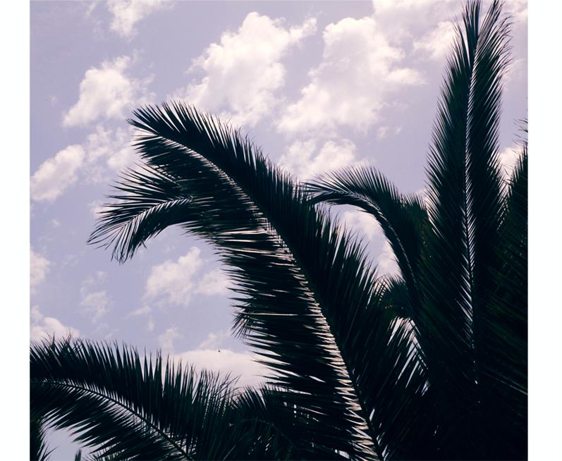 palmier ciel
